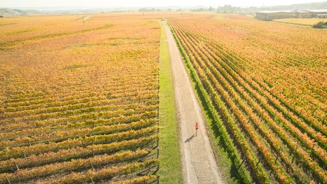 Take the road less travelled with the Air New Zealand Hawke's Bay International Marathon