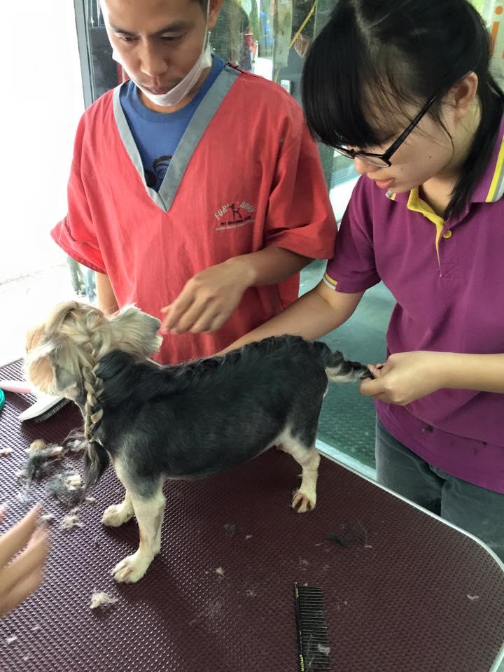 SH grooming fur and away