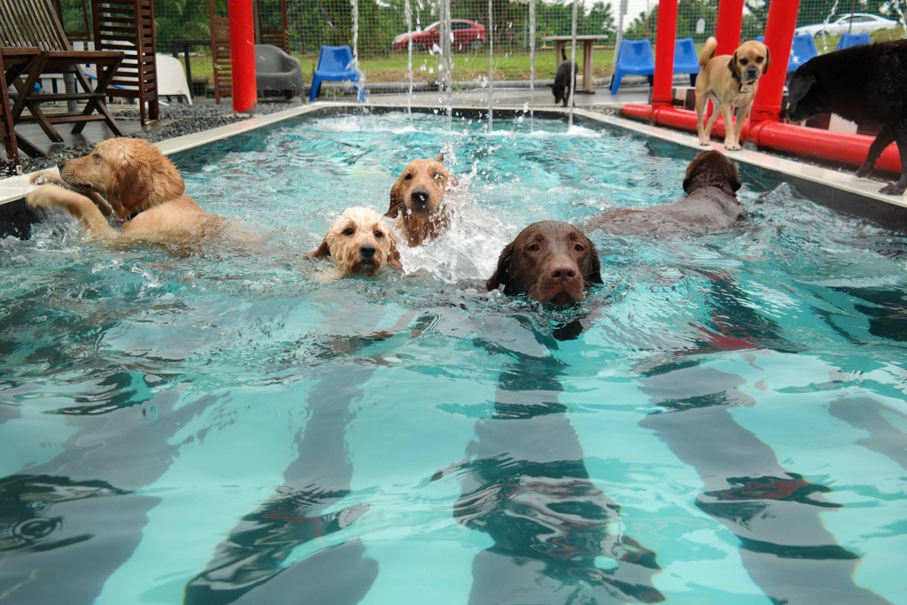 SH pool1