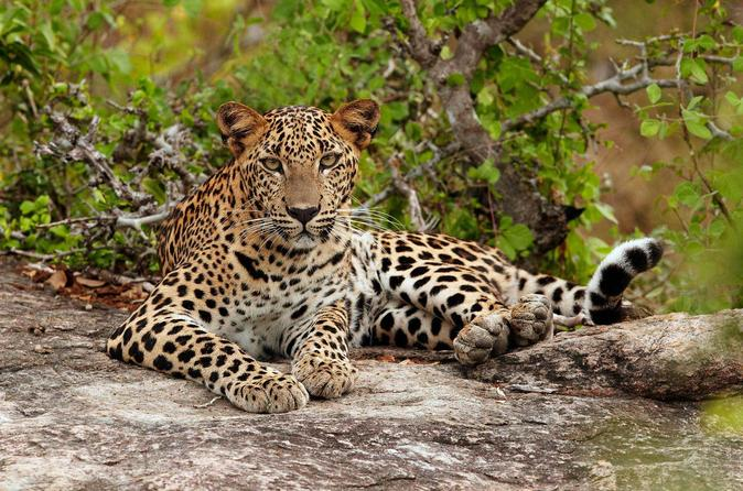 overnight-private-leopard-safari-with-luxury-tented-camping-in-colombo-228946